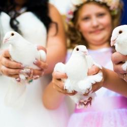 duer-til-bryllup-askepott